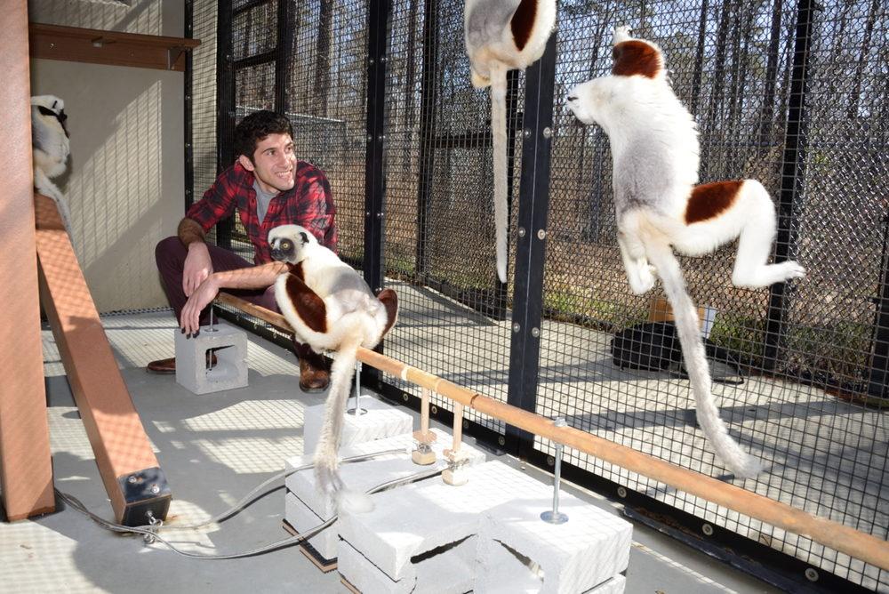 Michael Granatosky at the Duke Lemur Center