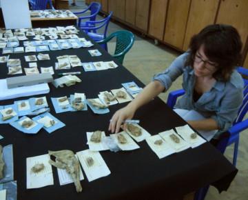 Alia Gurtov, MNI analysis, National Museum of Dar es Salaam, Tanzania