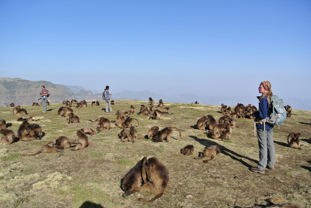May 2014 (dry season): Geladas come off the cliffs, where they sleep at night, and regroup at the top. They often take an hour or so to socialize and rest before heading off to forage. Pictured (left to right): graduate student Morgan Gustison; field assistant Esheti; field manager Megan Gomery. Photo by E. Tinsley Johnson.