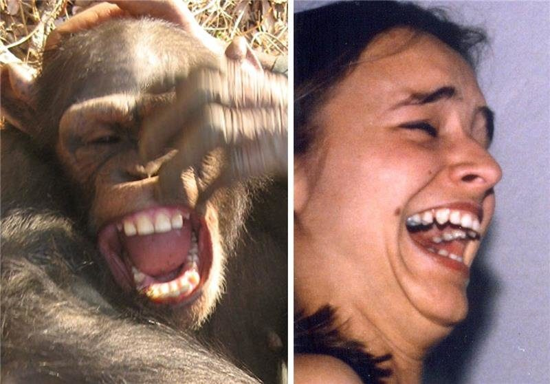 Open mouth expressions of silent and audible laughter in chimpanzees and humans. Image from PLOS ONE paper. Davila-Ross et. al.
