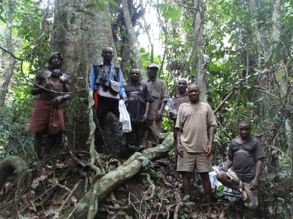 Bill Loubelo (center with binoculars)recording foodtree density and distribution. Photo credit: Karline Janmaat