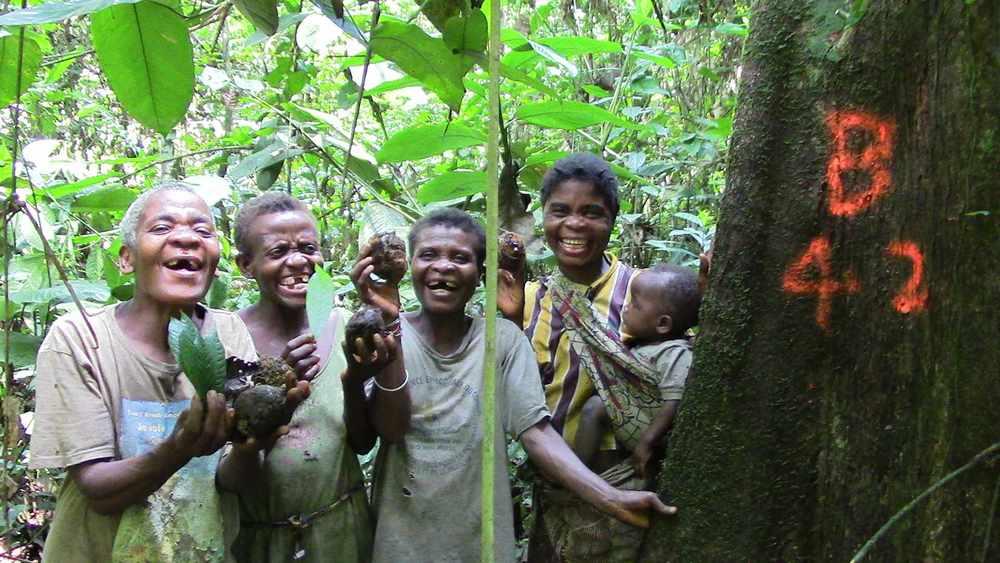 Babendjele Yaka women at a irvingia nut tree. Photo credit: Haneul Jang