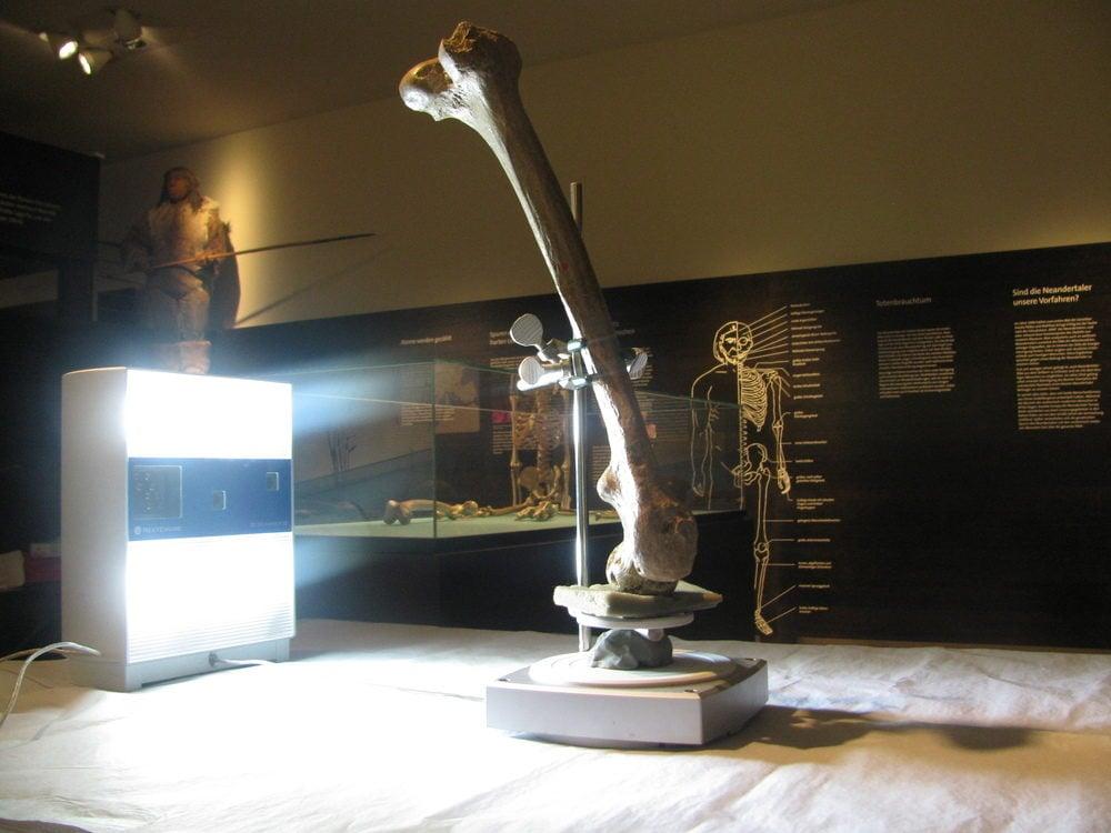 Neanderthal femur