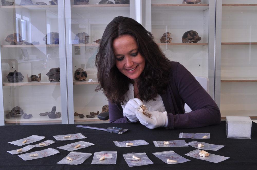 MaríaMartinon-Torresstudying the Sima de los Huesos dental sample. Photo credit:E. Lacasa.