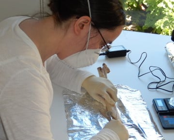 Dorothée Drucker sampling a human bone at the Banyoles Archaeology Museum, Catalonia