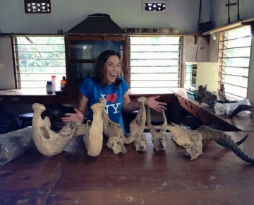 Marian Hamilton at the Makarere University Biological Field Station with bovid skulls from which she was able to take samples.