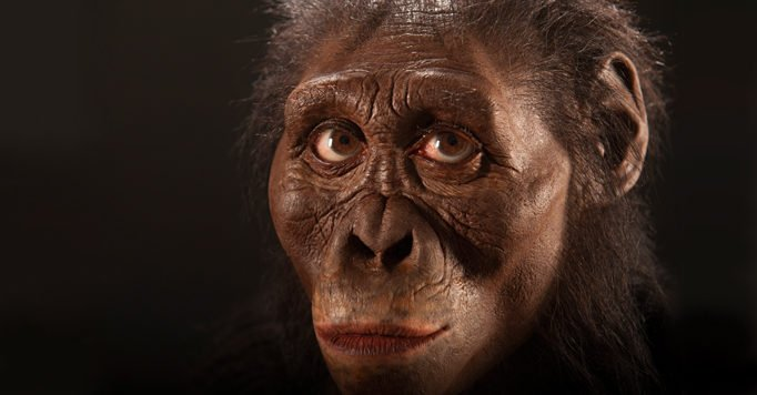 Lucy reconstruction by John Gurche. Photo courtesy of the Cleveland Museum of Natural History.