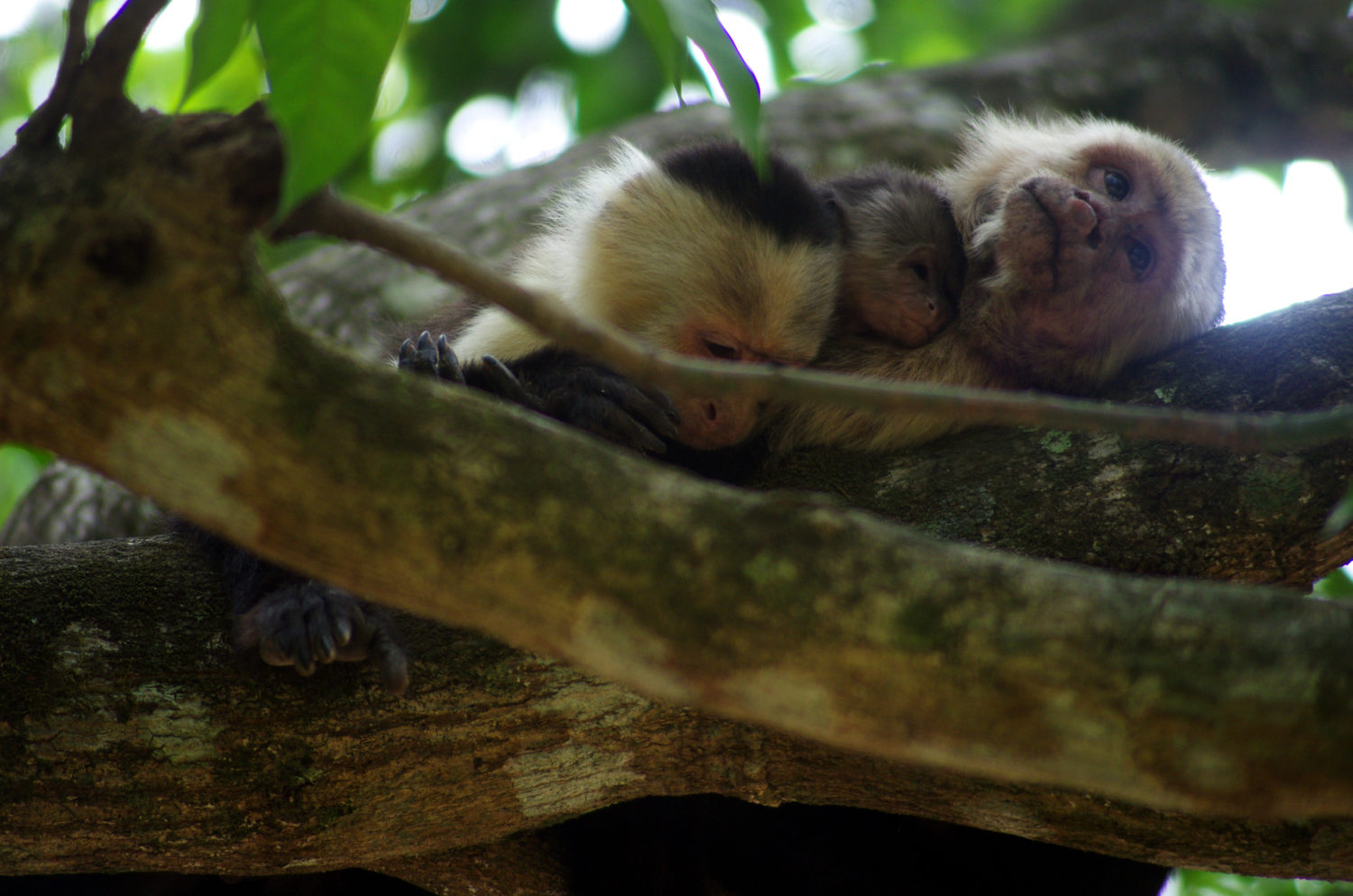 The Leakey Foundation | Primate Tales: The Story of Moth, a