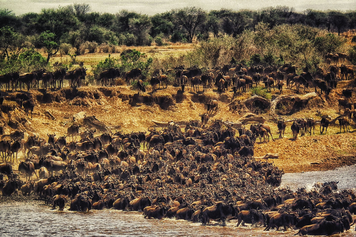 The Leakey Foundation | H  Gregory