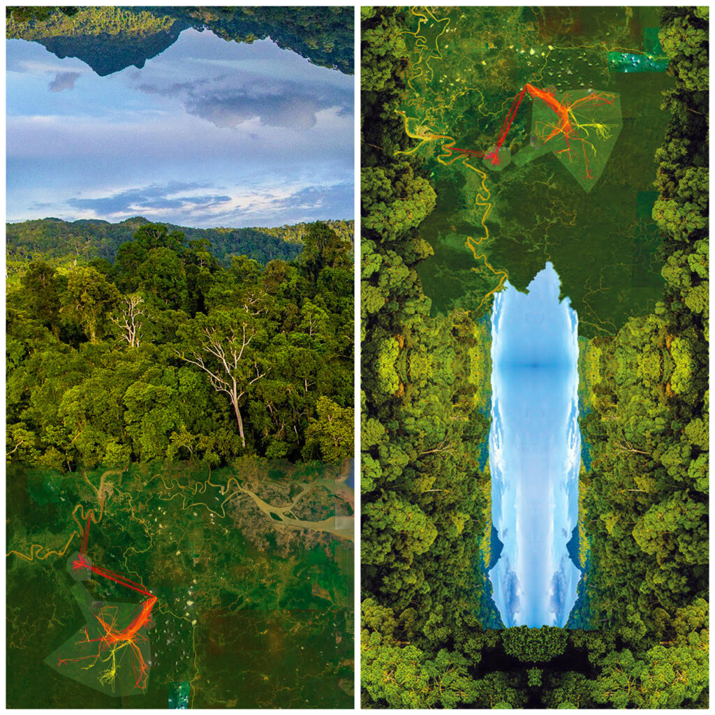 Vibrant images of a green forest overlaid with gps tracking data